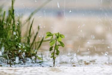 La mousson au Népal : ce phénomène si attendu et tant redouté